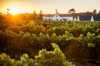Newstead Wines & Vineyard Kitchen