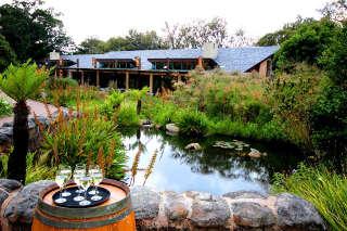 moyo - Kirstenbosch